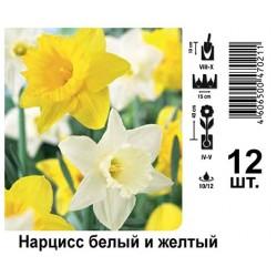Нарцисс белый и желтый