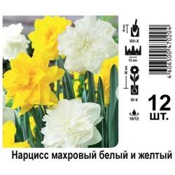 Нарцисс махровый белый и желтый