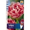 Тюльпан Анжелик