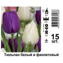 Тюльпан белый и фиолетовый
