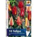 Тюльпаны гибридные Кауфмана микс