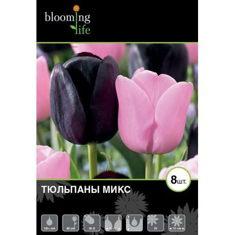 Тюльпаны простые дуэт микс